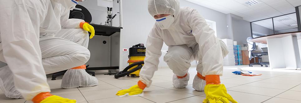 Empresa Desinfecção Porto